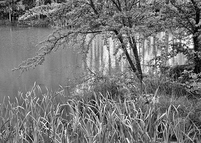 Reeds and Tree