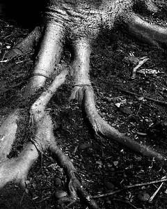 trees legs