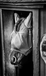 Masked Horse
