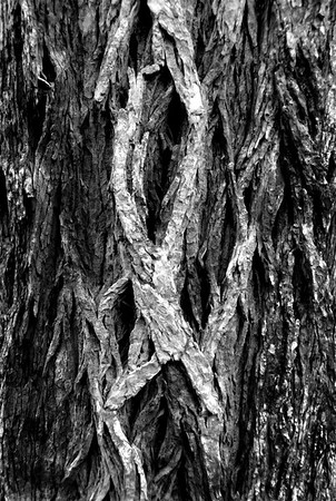 Dancer in Tree