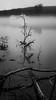 Fog on Deep River