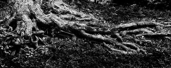 Tree stomp