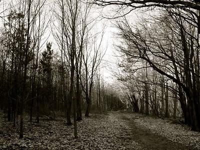 Winter  NY Woods