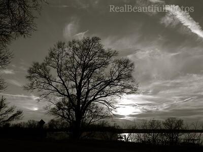 River Tree