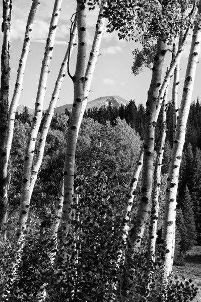 Near Crested Butte, Colorado
