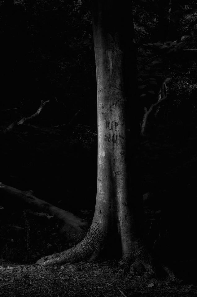 Reynolda Gardens Trees #10