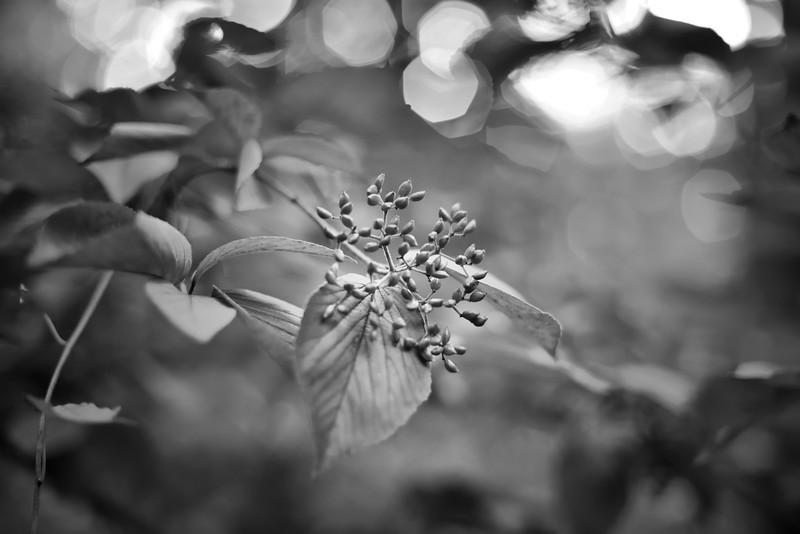 Reynolda Gardens - Summer #3