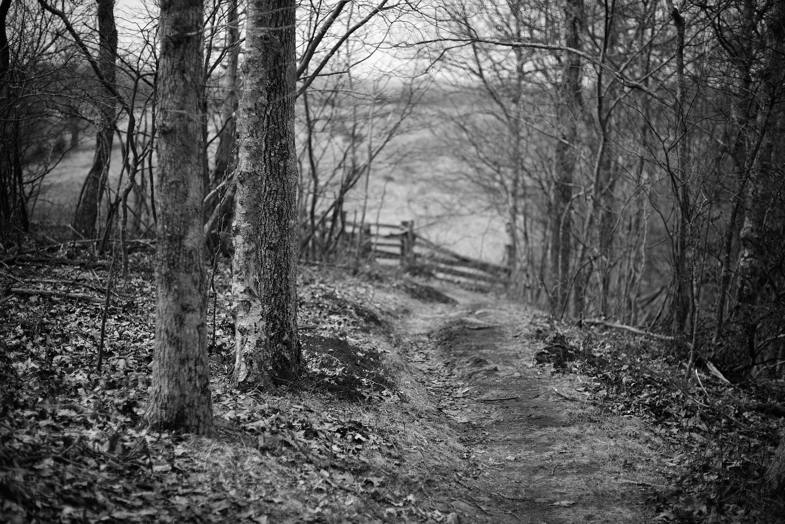 Blue Ridge Fence #2