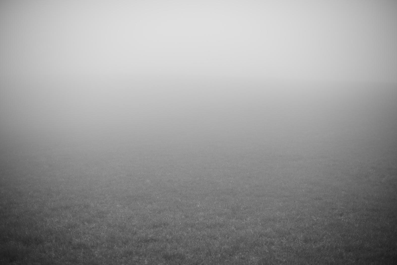 Fog in a Field