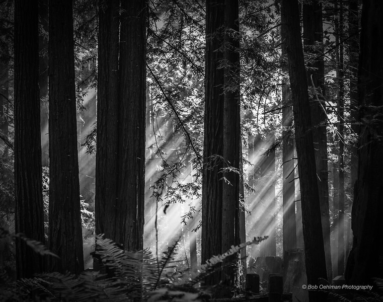 Mysteries of the Forest