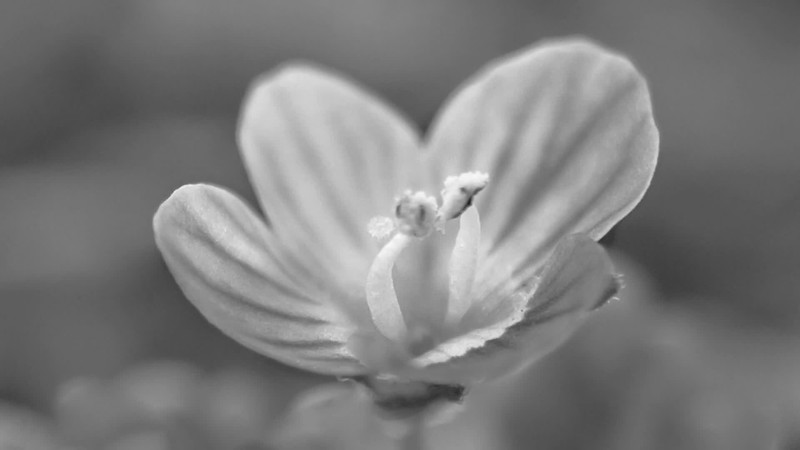 2019 Black & White: 2019 Black & White, part 1 (January thru June) Photo Slideshow