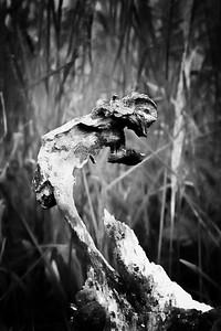 Spirit of Ecstasy Wood