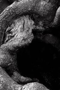 Wood Sleep - look harder, see the face