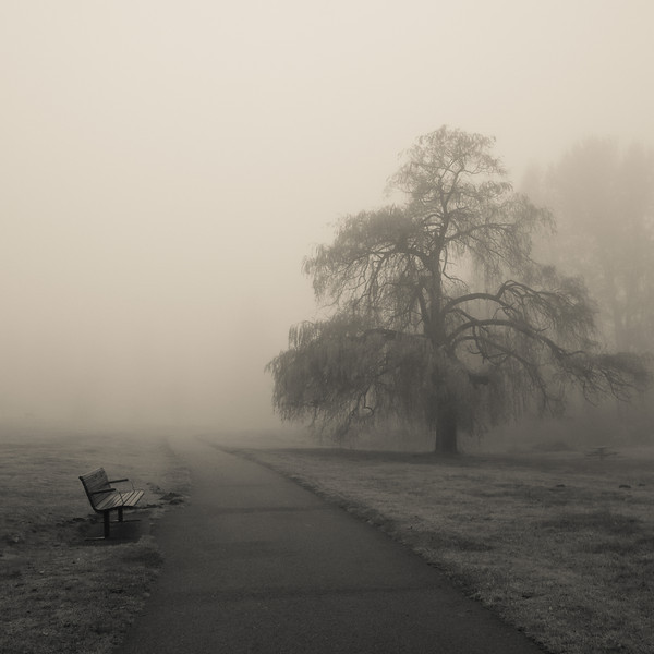 I have wanted to photograph this tree for some time. Had to wait a long time for good fog in the right places so that I could make this image. Happy now. lol