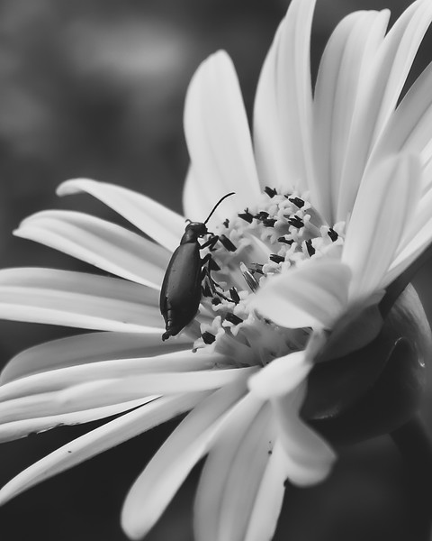 Bug on the Cup Plant