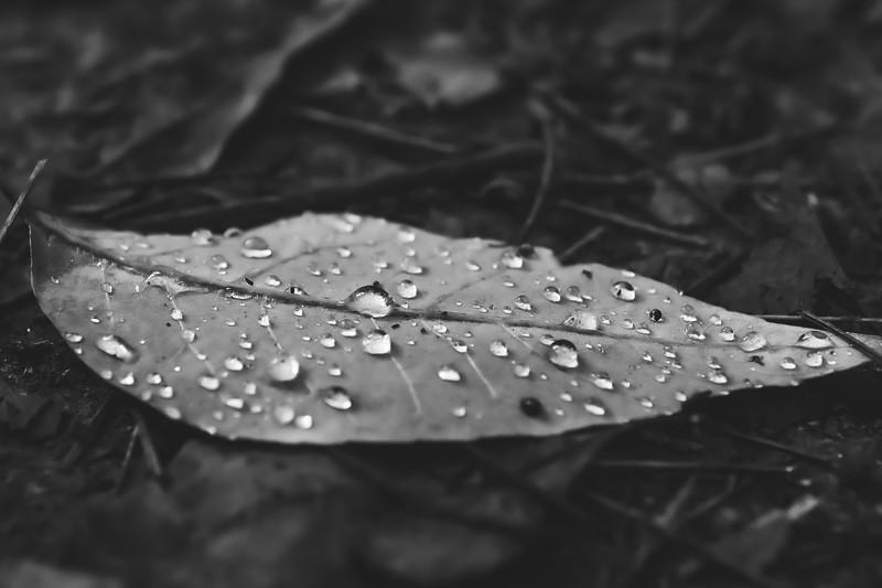 Dew-covered Leaf