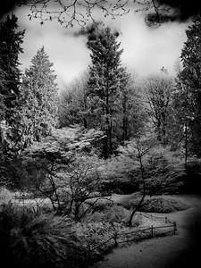 Seattle Arboretum, WA (IR)