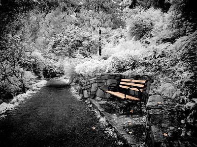 Park Bench, Seattle Arboretum WA (IR)