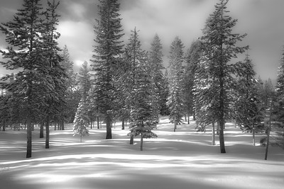 Winter Dream in Black & White 8730bw