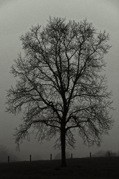 Tree and foggy morning - Lehigh County, PA - 2008