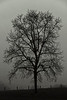 Tree and foggy morning - Lehigh County, PA - 2008