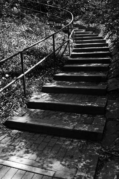 Steps at Eastern University Campus - Wayne, PA - 2013