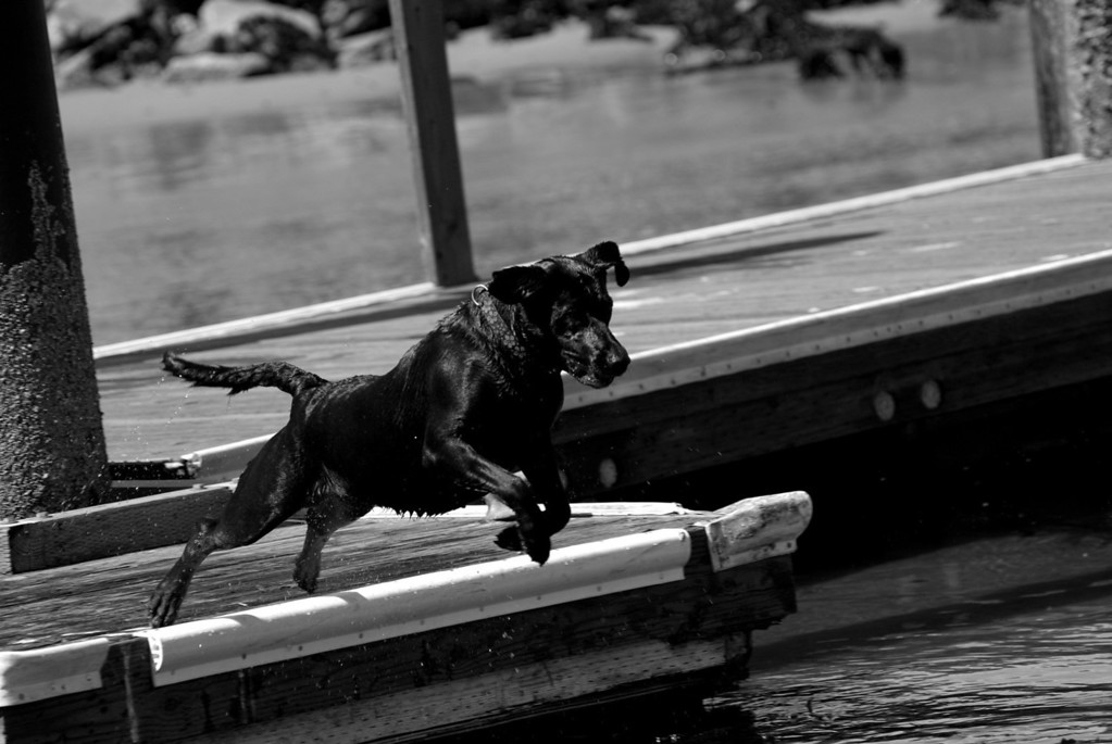 'DD' Jumping into the Bay