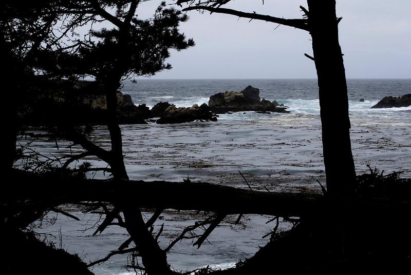 Trees & Rocks