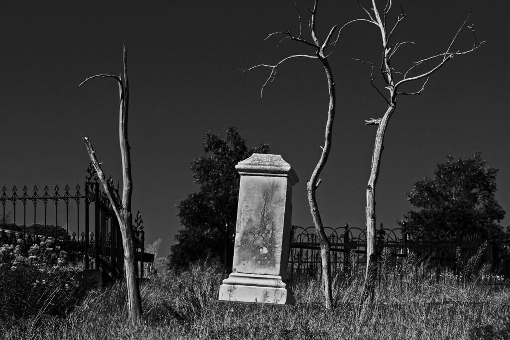 Gravestones & Trees