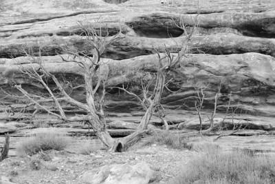 Dessicated Vegetation on Moki Dugway