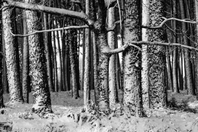 Winter forest with snow in France