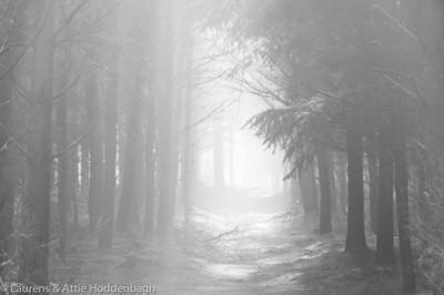 Winter Forest Ermelo  Filename: NEX00060-Winter_Forest_Ermelo-NL.jpg