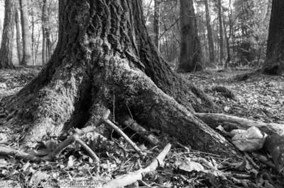 Winter Forest Ermelo  Filename: NEX00043-Winter_Forest_Ermelo-NL.jpg