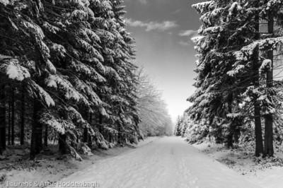 Winter forest in Raeren Belgium  Filename: NEX01587-Raeren-BE.jpg