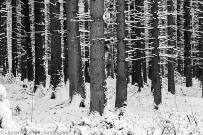 Winter forest in Raeren Belgium  Filename: NEX01574-Raeren-BE.jpg