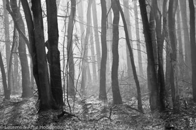 Winter Forest Ermelo  Filename: NEX00036-Winter_Forest_Ermelo-NL.jpg