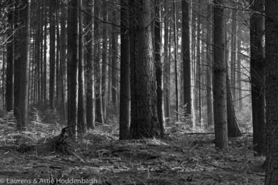 Winter Forest Ermelo  Filename: NEX00056-Winter_Forest_Ermelo-NL.jpg