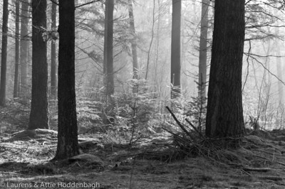 Winter Forest Ermelo  Filename: NEX00053-Winter_Forest_Ermelo-NL.jpg