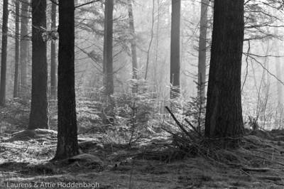 Winter Forest Ermelo  Filename: NEX00053-Winter_Forest_Ermelo-NL.jpg