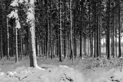 Winter forest in Raeren Belgium  Filename: NEX01601-Raeren-BE.jpg