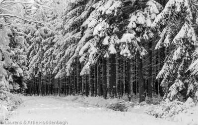 Winter forest in Raeren Belgium  Filename: NEX01563-Raeren-BE.jpg