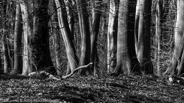 Winterforest in Ermelo, NL