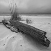 Driftwood, Pensacola Beach, December 2011