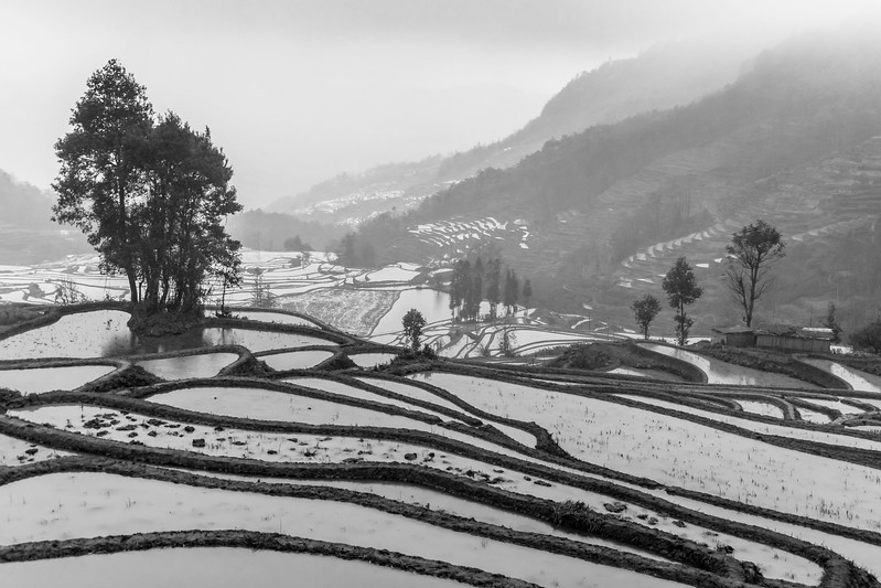 Rice terraces under the rain