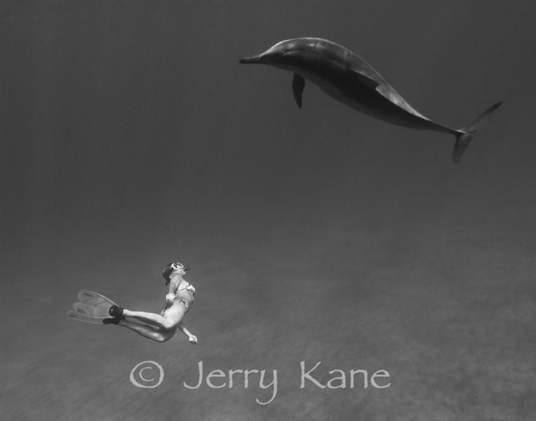 Spinner Dolphin (stenella longirostris) and snorkeler - Hookena, Big Island, Hawaii