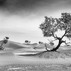 """Dunes of Mhamid  <div class=""""ss-paypal-button"""">Filename: CEM001064-Mhamid-MAR-EDIT.jpg</div><div class=""""ss-paypal-button-end"""" style=""""""""></div>"""