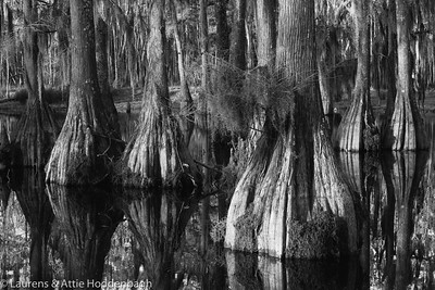 Swamp with bald-cypresses