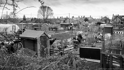 Tending the Allotments - 20 February 2019