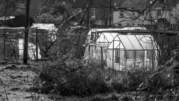 Winter Plastic - Newbury Allotments