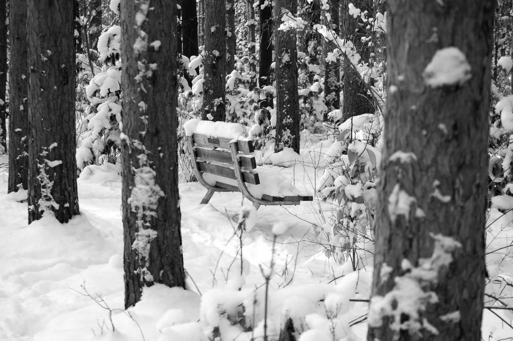 Webster Park Bench